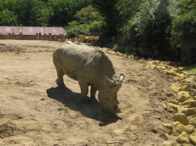 rhinocros.jpg